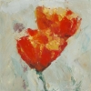 poppy on white_20x20